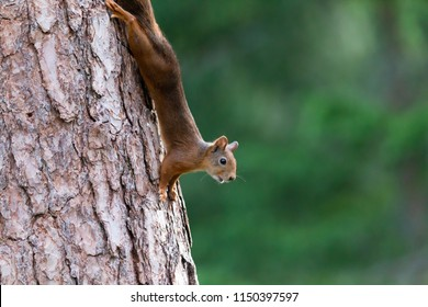 Funny squirrel tree