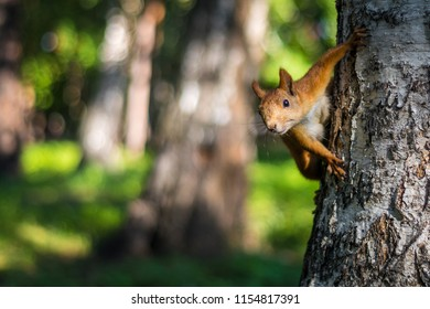 funny squirrel in the tree