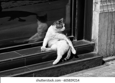Funny Street Cat Sitting Like A King Of The Street