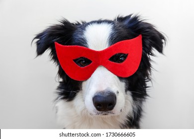 Funny studio portrait of cute smiling dog border collie in superhero costume isolated on white background. Puppy wearing red super hero mask in carnival or halloween. Justice help strenght concept