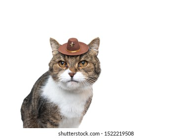 funny studio portrait of a tabby white british shorthair cat wearing a small cowboy hat looking at camera in front of white background with copy space