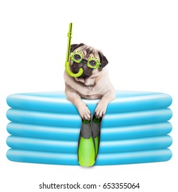 funny summer pug dog with goggles, snorkel and flippers in inflatable pool, isolated on white background