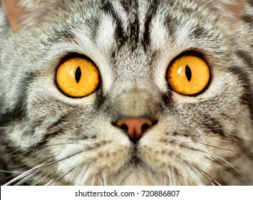 Funny surprised cat eyes. Portrait of a cat.