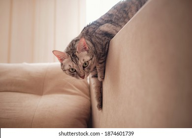 a funny tabby gray cat rests on the sofa on a sunny day. Comfort in home