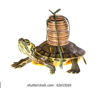 Funny turtle carrying a stack of money savings to the bank