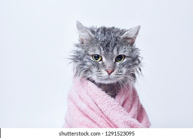 Funny wet gray tabby cute kitten after bath wrapped in pink towel with sad eyes. Pets and lifestyle concept. Just washed lovely fluffy cat on grey background.