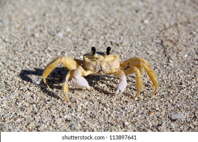 funny yellow crab on the beach
