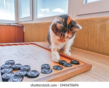 Funny young calico cat playing backgammon indoors, pet intelect. Cute kitty moving board game pieces, soft selective focus