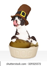 Funny young dog wearing a pilgrim hat and licking his lips while eating a turkey leg for Thanksgiving dinner