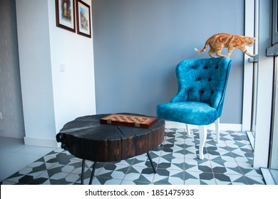 Funny young orange tabby cat at home with cozy modern design interior with elegant blue chair in retro style and black wooden coffee table over gray wall.