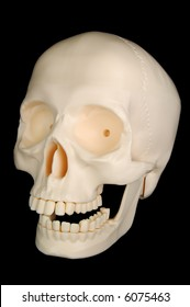A funny-looking plastic skull isolated on a black background.