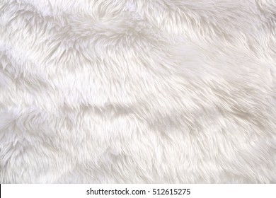 fur background. Close up