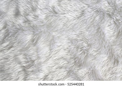 fur background. Close up