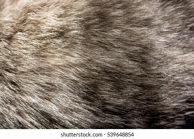 Fur of the cat