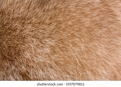 Fur closeup on a brown raccoon fur