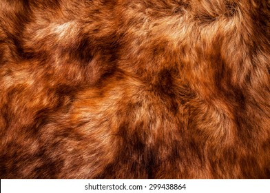 Fur, Red Brown Shade. Wolf Fox Skin. Natural Mountain Wildlife Animal. Concept and Style for Background, Texture and Wallpaper, Close up Full frame.