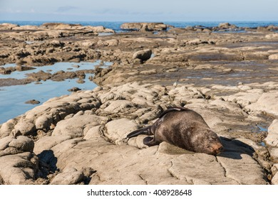 fur seal sleeping on beach