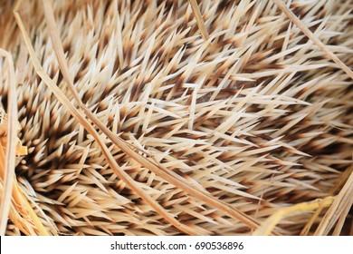 fur sharp of Hedgehog
