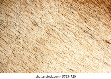 Fur surface. Texture or background