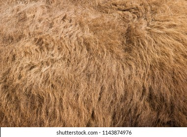 Fur texture old bison hair, brown and warm