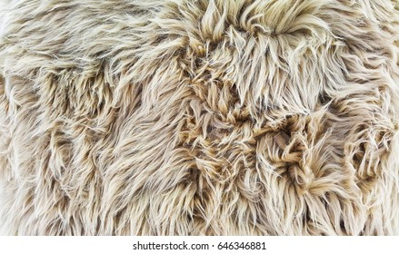 Fur Texture, Wool background