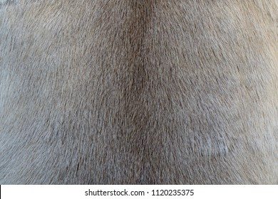 Fur texture for your background