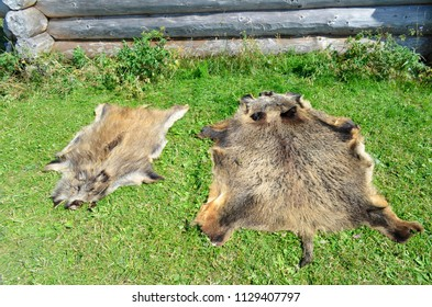 Fur of wild boar on the grass