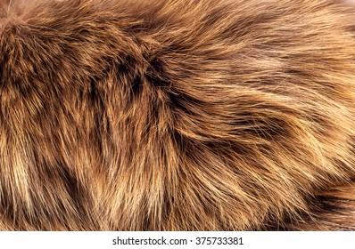 fur, wool