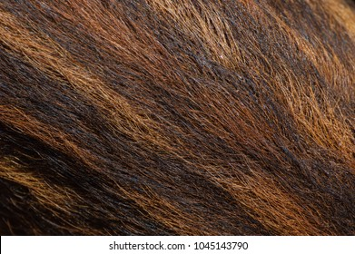Fur of young wild boar
