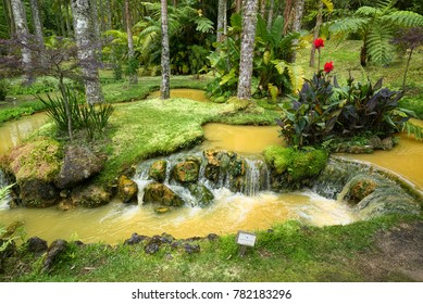 FURNAS, AZORES, PORTUGAL - JUNE 27, 2017: Streams of natural mineral water of yellow color across Terra Nostra Garden, located in Furnas town on Sao Miguel island of Azores, Portugal.