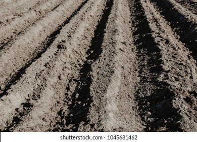Furrow rows in organic field prepared for planting potatoes by hand. Organic farming.