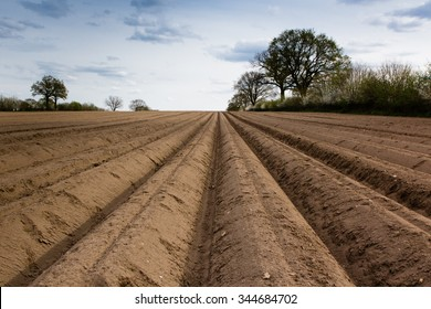 furrows on potato field