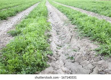 furrows in plowed field