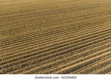 the furrows of a plowed field