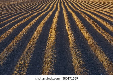 Furrows row pattern in a plowed field prepared for planting potatoes crops in spring.