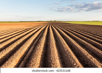 Furrows row pattern in a plowed field prepared for planting crops in spring. Horizontal view in perspective.