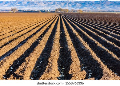 Furrows in the soil for plowing