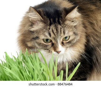 furry cat and grass