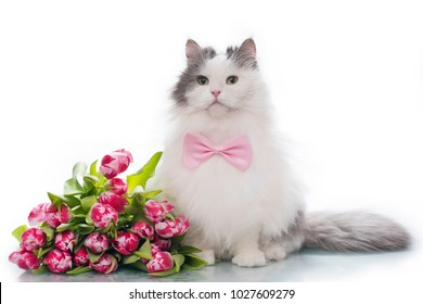 furry cat on white isolated background with a bouquet of tulips