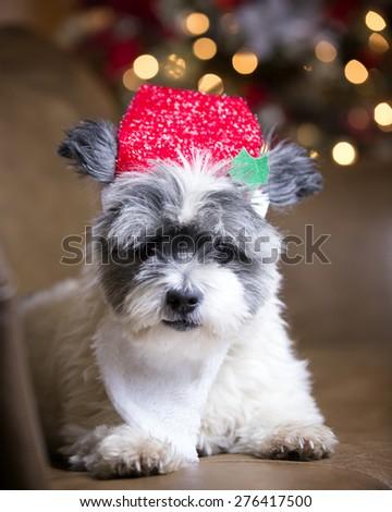 48372f9089d61 Furry Dog Santa Hat Beard Stock Photo (Edit Now) 276417500 ...