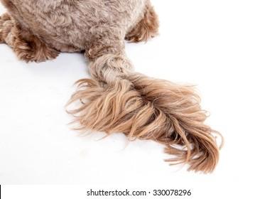 Furry dog Tail