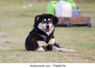 A furry homeless dog sitting in the field