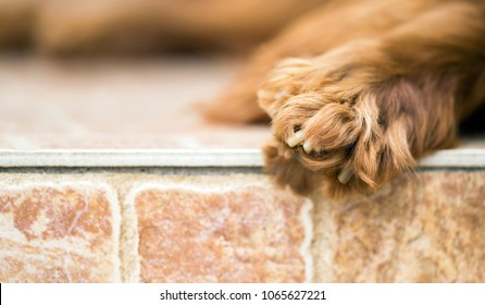 Furry paw of a cute Irish Setter dog - web banner with blank, copy space