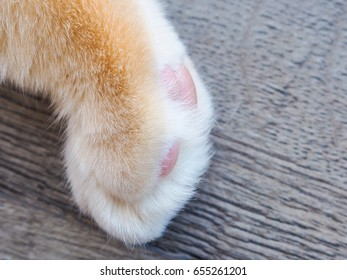 furry paw, domestic cat, close, space for text