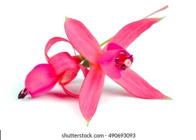 Fuschia Flower Images, Stock Photos & Vectors   Shutterstock