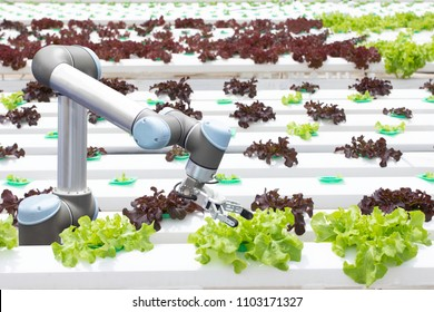 Futuristic robotic arm for agriculture. smart farm automation robot assistant with hydroponic technology. lattuce salad plant growing in greenhouse.