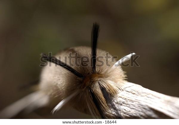 Fuzzy Caterpillar on a tree branch.