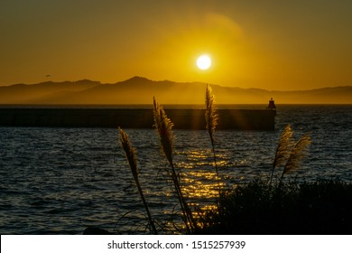 Fuzzy reeds swaying in the yellow sunset, with a view of the blue water and hills in the background.