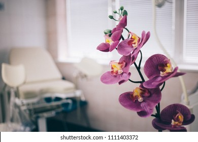 Fyazino, Russia - 06 11 2018: gynecological chair in the doctor's office, Orchid flower. women's health concept