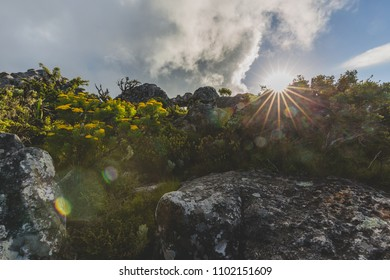Fynbos on the top of Table Mountain in Cape Town with lens flare